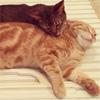 芸人チュートリアルの徳井、お風呂の蓋でくつろぐ愛猫を公開