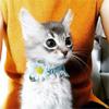 ダレノガレ明美、超絶可愛い猫ちゃんベイビー写真を公開