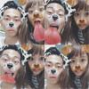 モデルの近藤千尋が夫婦で犬加工のツーショット写真を公開