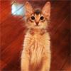 モデルのダレノガレ明美、猫ちゃんのジジが立ってる写真を公開